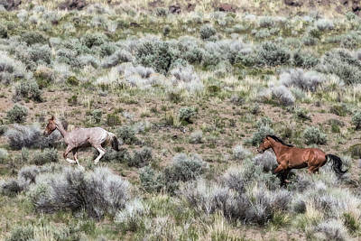 Photograph - Frolic For Two, No. 1 by Belinda Greb