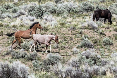 Photograph - Frolic For Two, No. 7 by Belinda Greb