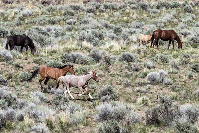 Photograph - Frolic For Two, No. 8 by Belinda Greb