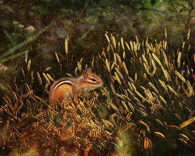 Chipmunks Wall Art - Photograph - Frolic by Susan Capuano