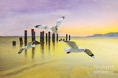 Gull Wall Art - Photograph - Frolicking Gulls by Laura D Young