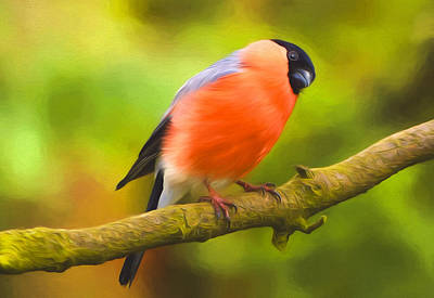 Bullfinch Wall Art - Photograph - From A Birds Point Of View by Georgiana Romanovna