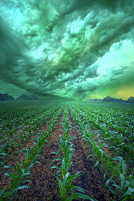 Photograph - From Beginning To End by Phil Koch