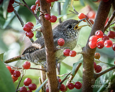 Photograph - From Bugs To Berries by Amy Porter