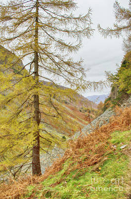 Photograph - From Castle Crag Cumbria by Linsey Williams