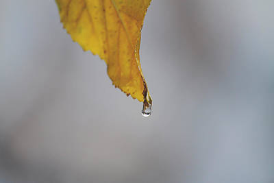 Water Droplets Photograph - From My Veins by Laurie Search