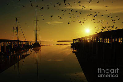 Photograph - From Shadows by Diana Mary Sharpton