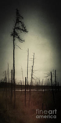 Photograph - From The Ashes by RicharD Murphy