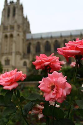 Photograph - From The Bishop's Garden by Jeff Heimlich