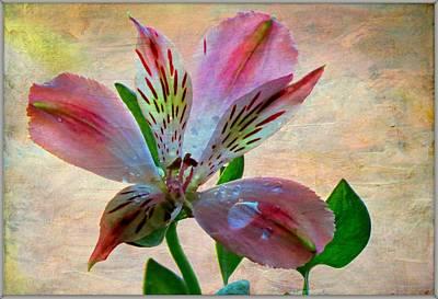 From The Garden Art Print