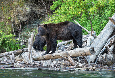 Photograph - From The Great Bear Rainforest by Scott Warner
