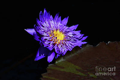 Photograph - From The Lily Pond by Cindy Manero