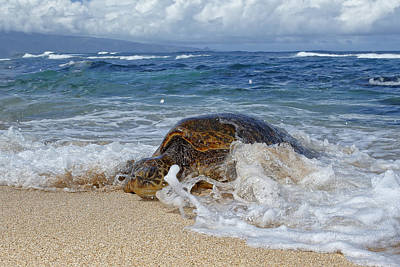 Ocean Turtle Photograph - From The Sea by Peter Stahl