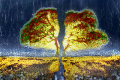 Wall Art - Photograph - From The Seed To The Trunk by Abstract Paintings