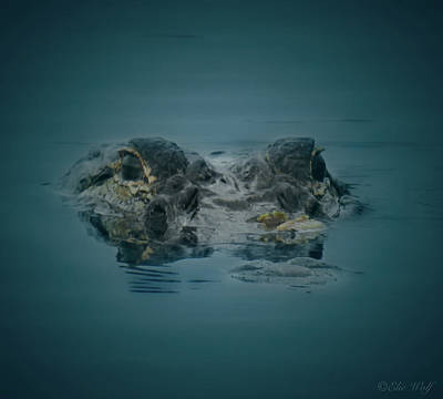 From The Series I Am Gator Number 6 Art Print