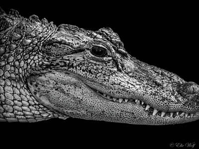 Photograph - From The Series I Am Gator Number 9 by Elie Wolf