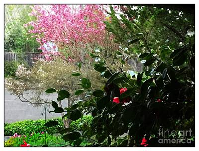 Photograph - From The Window by Leslie Hunziker