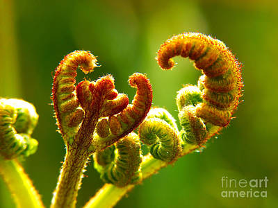 Photograph - Frond Fern by Minolta D