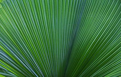 Photograph - Frond Folds by Michiale Schneider