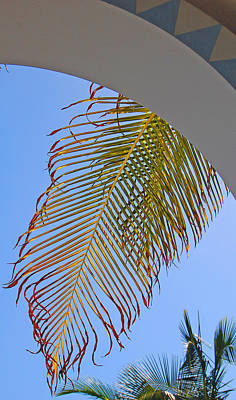 Palm Photograph - Frond by Jean Booth