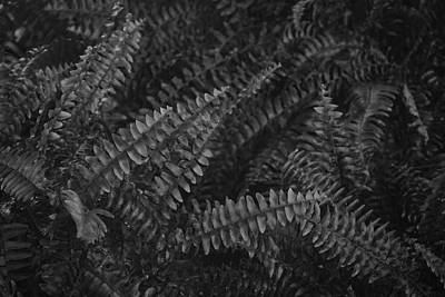 Photograph - Frond Light by Tim Good