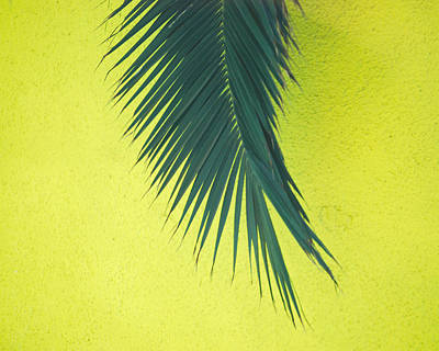 Art Print featuring the photograph Frond by Maggy Marsh