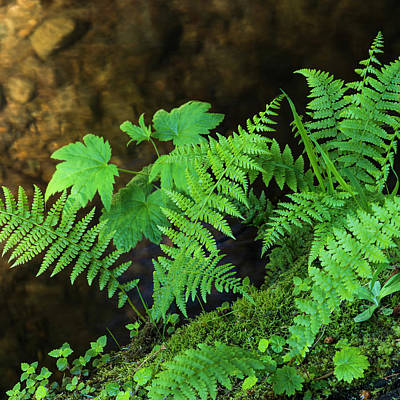 Photograph - Fronds And Leaves by Robert Potts