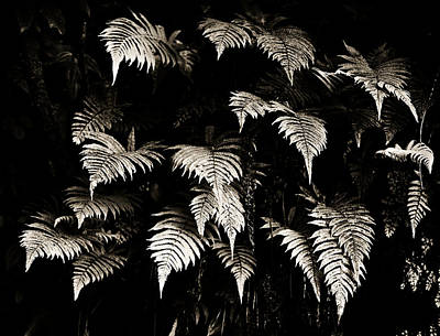 Black White Photograph - Fronds by Marilyn Hunt