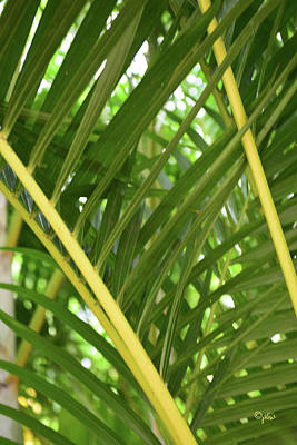 Photograph - Fronds by Paulette B Wright