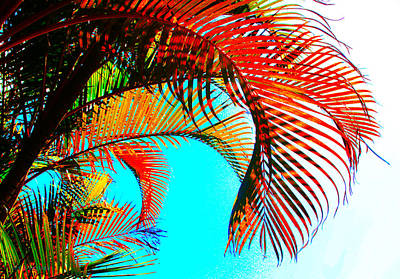 Photograph - Fronds by Susan Vineyard