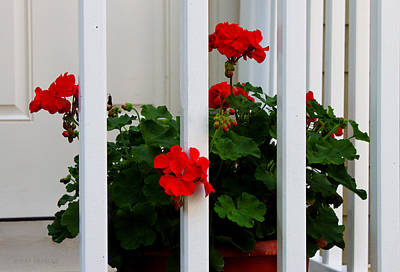 Photograph - Front Porch Geraniums by Susan Vineyard