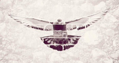 Photograph - Front View Of Landing Pigeon Fine Art by Jacek Wojnarowski