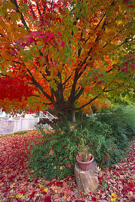 Photograph - Front Yard by Bruce Thompson
