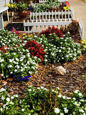 Photograph - Front Yard Flowers by Randy Sylvia