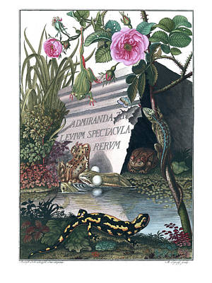 Drawing - Frontis Of Historia Naturalis Ranarum Nostratium by ArtistAugust Johann Roesel von Rosenhof