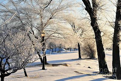 Winter Photograph - Frost Adorns The Cadillac City Park by Terri Gostola