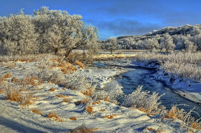 Photograph - Frost Along The Creek by Bruce Morrison