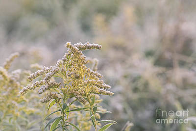 Photograph - Frost And Fall by Rima Biswas
