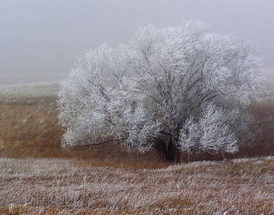 Photograph - Frost And Fog by Alana Thrower