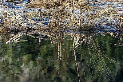 Photograph - Frost And Reflection by Robert Potts
