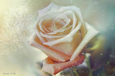 Digital Art - Frosty Rose by Bonnie Willis