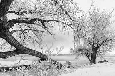 Photograph - Frost And Snow Covered Trees On The Plains by Tony Hake