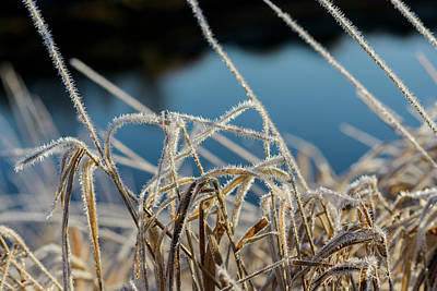 Photograph - Frost And Sunlight by Robert Potts