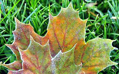 Fall Photograph - Frost Bit by Terri Gostola
