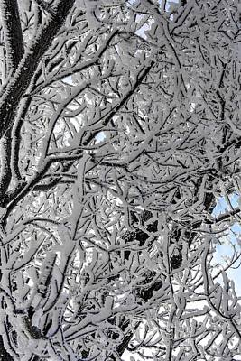Photograph - Frost Branches by David Matthews