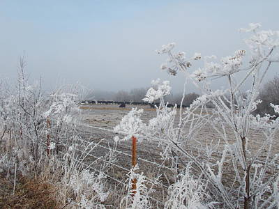 Photograph - Frost by Coleen Harty