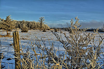 Photograph - Frost Covered Cedars by Bonfire Photography