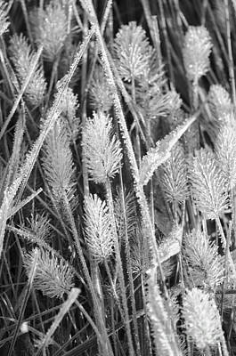 Photograph - Frost Covered Fluffy Grass by Tamara Becker
