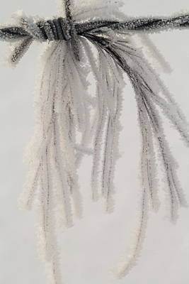 Keith Richards - Frost Covered Horse Hair by Amanda Kiplinger