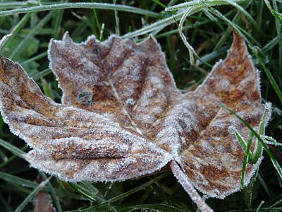 Photograph - Frost Covered Leaf by Amanda Balough